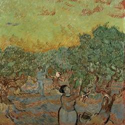 Uliveto con raccoglitori di olive
